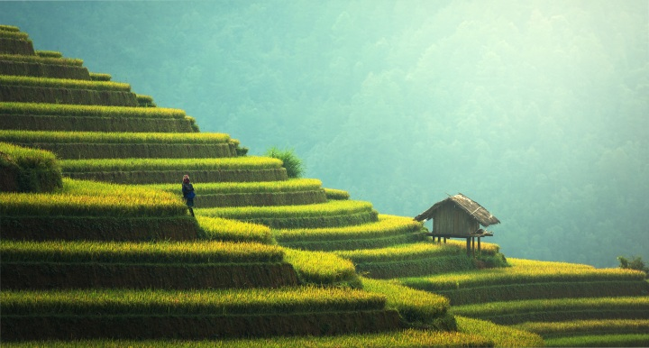 china tea estate