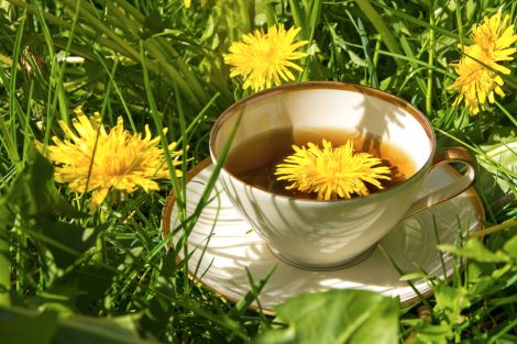 Dandelion Teas available at Teatrition.com from Teatrition Tea And Wellness